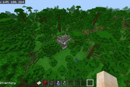 JungleSeedDEC2020-4.jpg